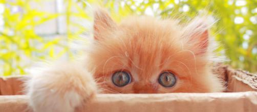 chat: cinq conseils pour le rendre plus câlin