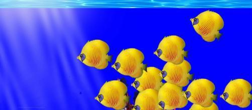 Dating sito qualcosa di pesce