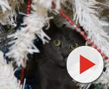 Images Gratuites : branche, hiver, chaton, chat, arbre de Noël ... - pxhere.com