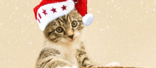 5 dangers qui guettent un chat durant l'hiver
