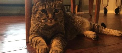 Ms. Kitty is a 10-year-old tabby who ended up at the shelter when her owner's passed away. [Image via Joy Williams - used with permission]