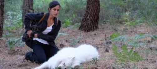 La Caccia Monteperdido, quarta puntata 24 novembre: Joaquin offre una taglia per trovare sua figlia