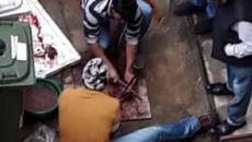 Milano, sdegno per un cortile di condominio usato come macelleria: 'Come nelle favelas'