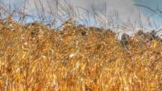 Agricoltura europea, NY Times: fondi comunitari usati per rafforzare le classi dirigenti