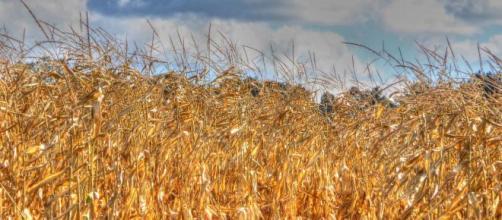 Lo strano giro dei fondi UE per l'agricoltura nei paesi dell'Est.