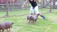 'A Fazenda 11': Lucas pede ajuda para Hariany e sai correndo dos porcos durante tarefa