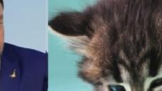 Gattini con Salvini, polemiche social: 'Animale che lo rappresenta perché mangia e dorme'
