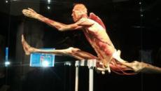 'Body Worlds Vital': inaugurata a Palermo la mostra sul corpo umano