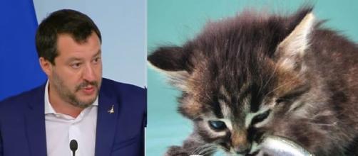 Matteo Salvini ed il gattino pubblicato sulla sua pagina Facebook.