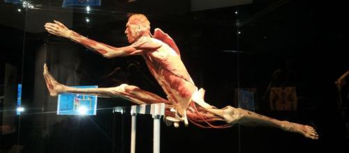 "Mostra ""Body Worlds Vital"" a Palermo 3"