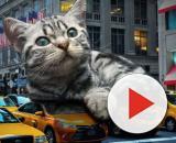 5 raisons qui expliquent pourquoi un chat lèche son maitre - photo publiée sur Pixabay