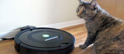 iRobot Roomba: 5 video divertenti, gatti in viaggio sull'aspirapolvere