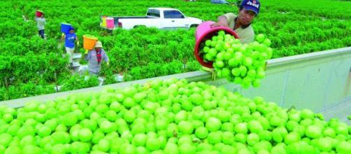 La alimentación en las comunidades campesinas tiene grandes ventajas. - elmundous.com
