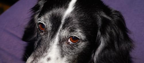 Firenze: colpito da ictus, ha ripreso a parlare dopo aver visto l'amato cagnolino.