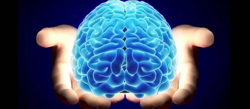 El cerebro es uno de los órganos vitales del cuerpo humano.