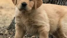 Casal inglês oferece R$ 165 mil ao ano a quem cuidar de cães em mansão