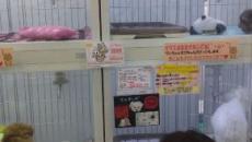 Primera condena en España a una tienda de animales por la muerte de decenas de cachorros