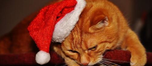 Pourquoi les chats doment avec une patte sur les yeux - Photo par Pixabay