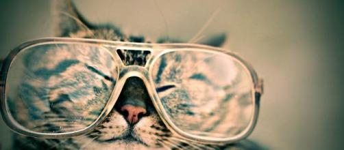 5 raisons qui expliquent pourquoi un chat réveille son maître.