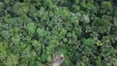 Amazzonia, ucciso dai taglialegna un giovane indigeno a capo dei 'Guardiani della foresta'