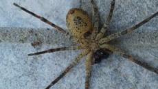 Trento, due ragazze avvistano un ragno sotto il divano e chiamano i Vigili del Fuoco