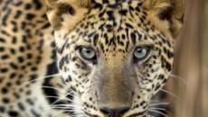 10 dos animais mais perigosos do mundo