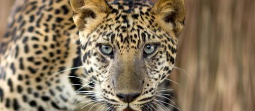 Nesta lista contém os 10 animais mais perigosos. (Arquivo Blasting News)
