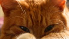 Chat : 5 dangers insoupçonnés de la maison