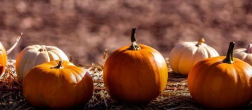 La zucca: l'ortaggio di eccellenza da settembre a novembre