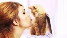 Chat : 5 signes qui montrent qu'il est jaloux