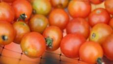 El tomate es mejor conservarlo a temperatura ambiente y no quitarle la piel al consumirlo