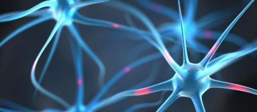 El sistema nervioso periférico es una compleja maquinaria de neuronas y nervios. - cognifit.com