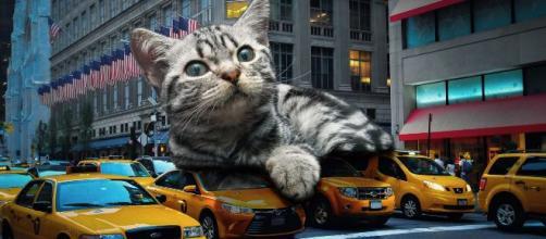 chat: 5 phrases que les propriétaires de chat ont déjà entendues