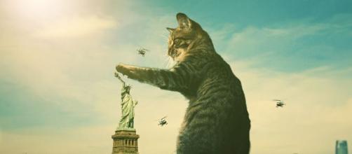 chat 5 choses qu'il essaie de dire quand il miaule