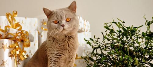 5 raisons qui expliquent pourquoi un chat est attiré par le sapin de Noël