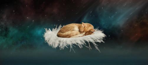 Chat: 5 excellentes raisons de ne pas le laisser domir dans son lit