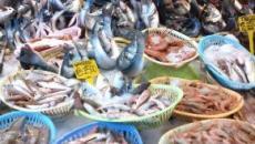 L'inchiesta di Report sul pesce di allevamento: sostanze inquinanti e poca trasparenza