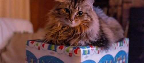 Chat 5 choses à ne surtout pas lui donner pendant le repas de Noël
