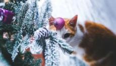 Chat : 5 choses à faire pour le protéger du froid