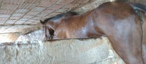 Égua cai e fica presa em corredor de casa em Sabará, Minas Gerais. (Corpo de Bombeiros/Divulgação)