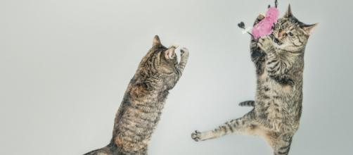 5 raisons qui expliquent les coups de folie d'un chat