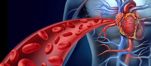 Dietas sanas y deportes cuidan el aparato circulatorio. - elutil.com