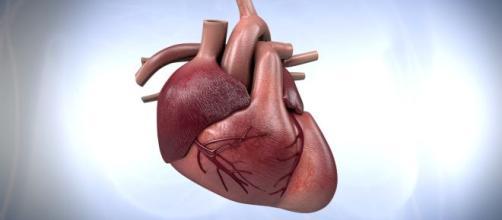 El corazón es uno de los órganos más sorprendentes el cuerpo humano.
