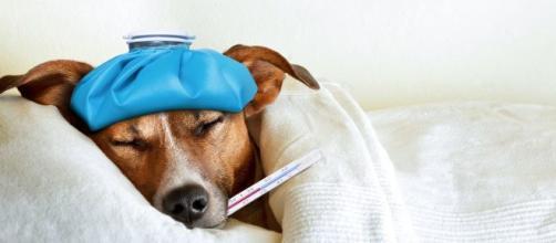 Algunas enfermedades afectan a las mascotas en invierno. - infobae.com