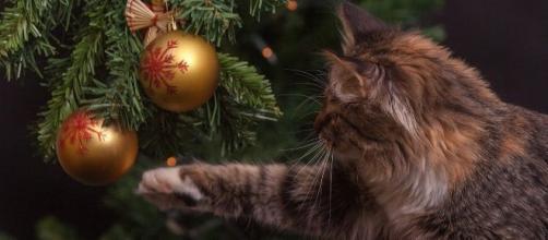 Chat ces conseils qui peuvent sauver le sapin de Noël