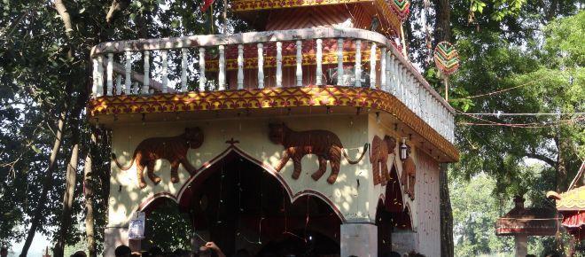 Nepal's animal sacrifice festival to appease goddess Gadhimai is celebrated despite 'ban'