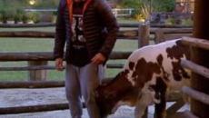 'A Fazenda 11': animais 'trollam' peões e viram estrelas do reality