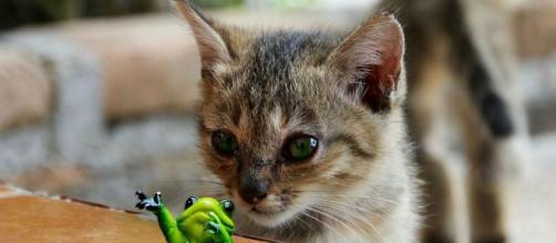 5 choses que seul les propriétaire de chat peuvent comprendre