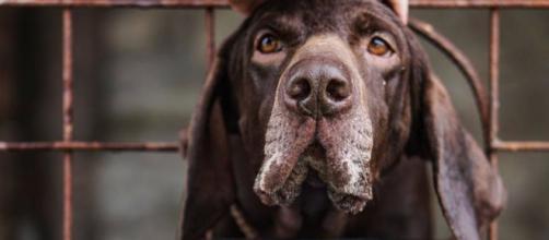 Le trafic d'animaux encoure plusieurs risques dont celui des maladies chez les animaux. Credit: Pexels/Anna Guerrero