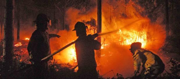 Incendios forestales afectan a Nueva Zelanda. - diarioconcepcion.cl